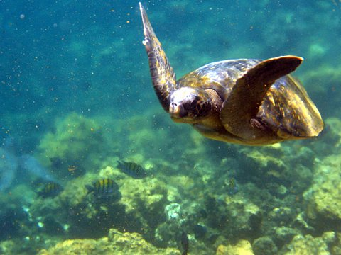 Islas Galapagos Fauna